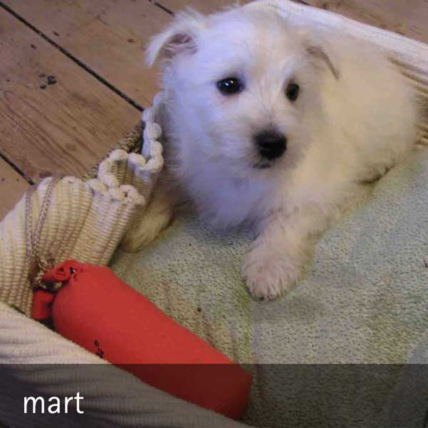 mart - the adventures of mart...